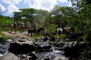 Horseback Riding Borinquen